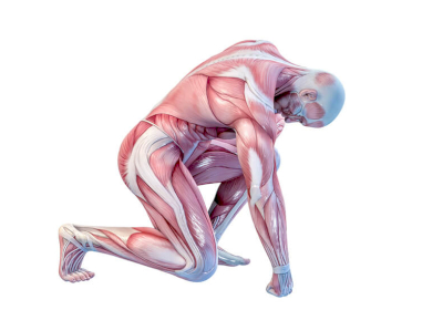 Can We Reverse Severe Muscle Loss?